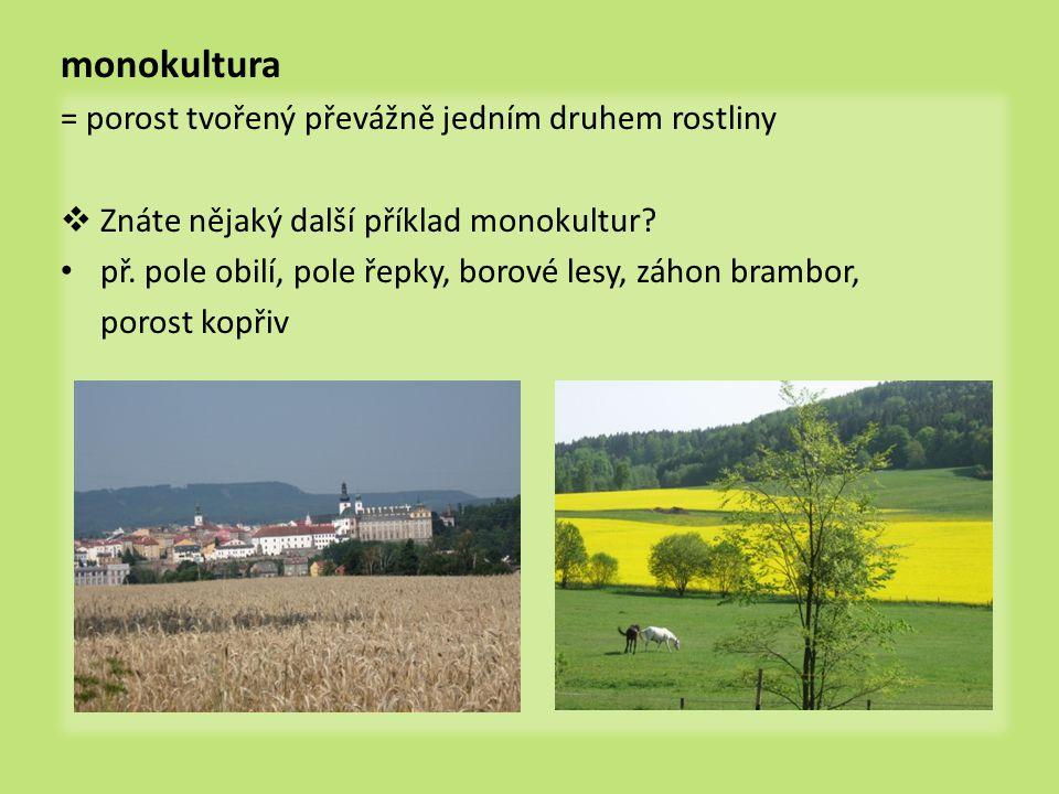 monokultura = porost tvořený převážně jedním druhem rostliny