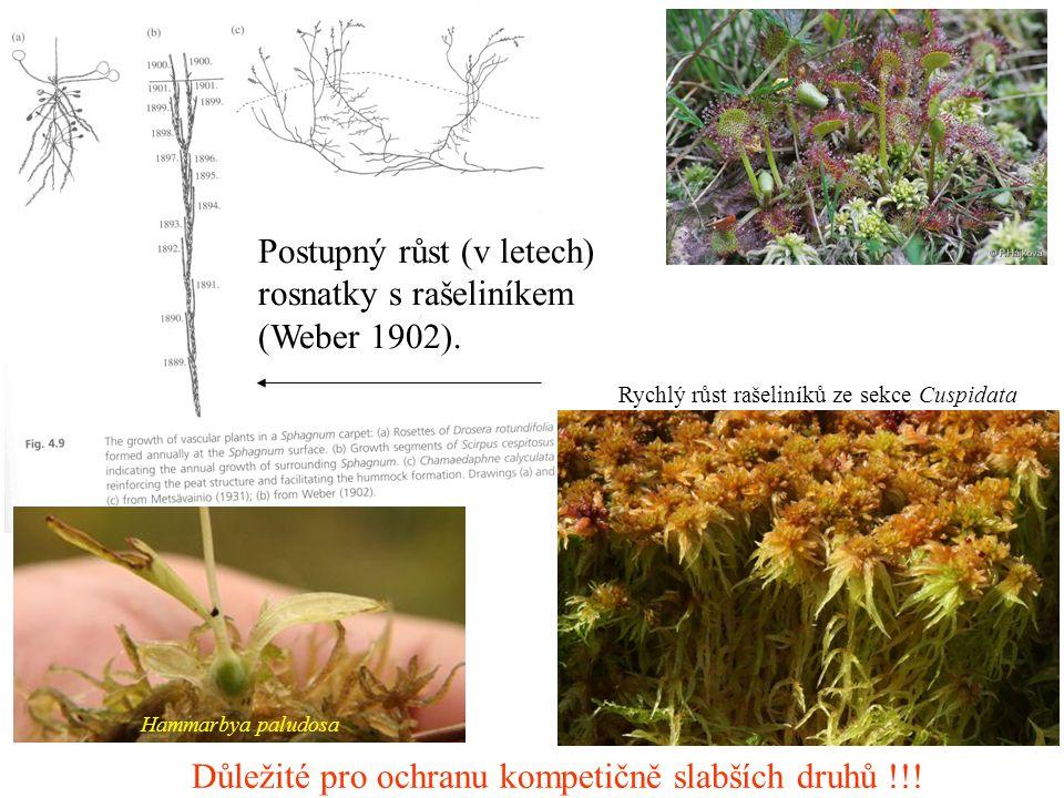Postupný růst (v letech) rosnatky s rašeliníkem (Weber 1902).