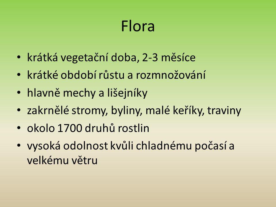 Flora krátká vegetační doba, 2-3 měsíce