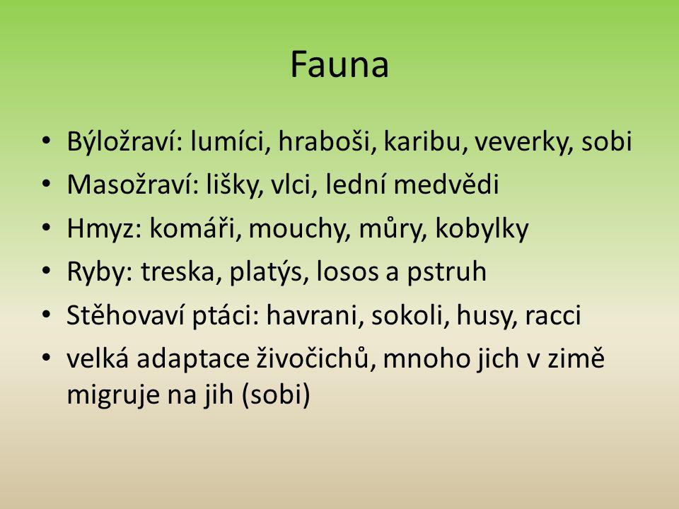 Fauna Býložraví: lumíci, hraboši, karibu, veverky, sobi