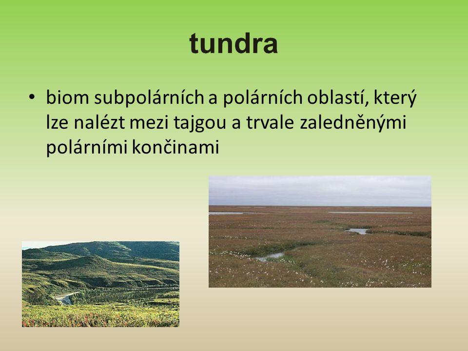 tundra biom subpolárních a polárních oblastí, který lze nalézt mezi tajgou a trvale zaledněnými polárními končinami.