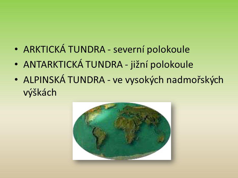 ARKTICKÁ TUNDRA - severní polokoule