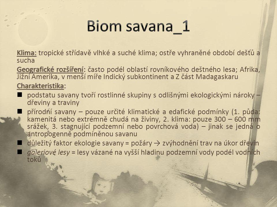 Biom savana_1 Klima: tropické střídavě vlhké a suché klima; ostře vyhraněné období dešťů a sucha.
