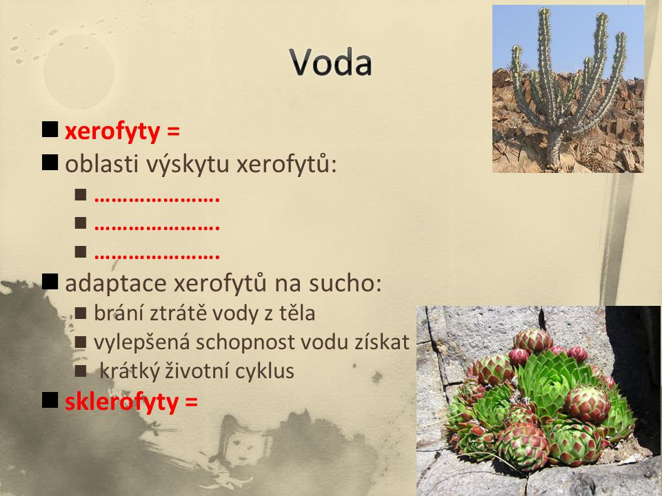 Voda xerofyty = oblasti výskytu xerofytů: adaptace xerofytů na sucho: