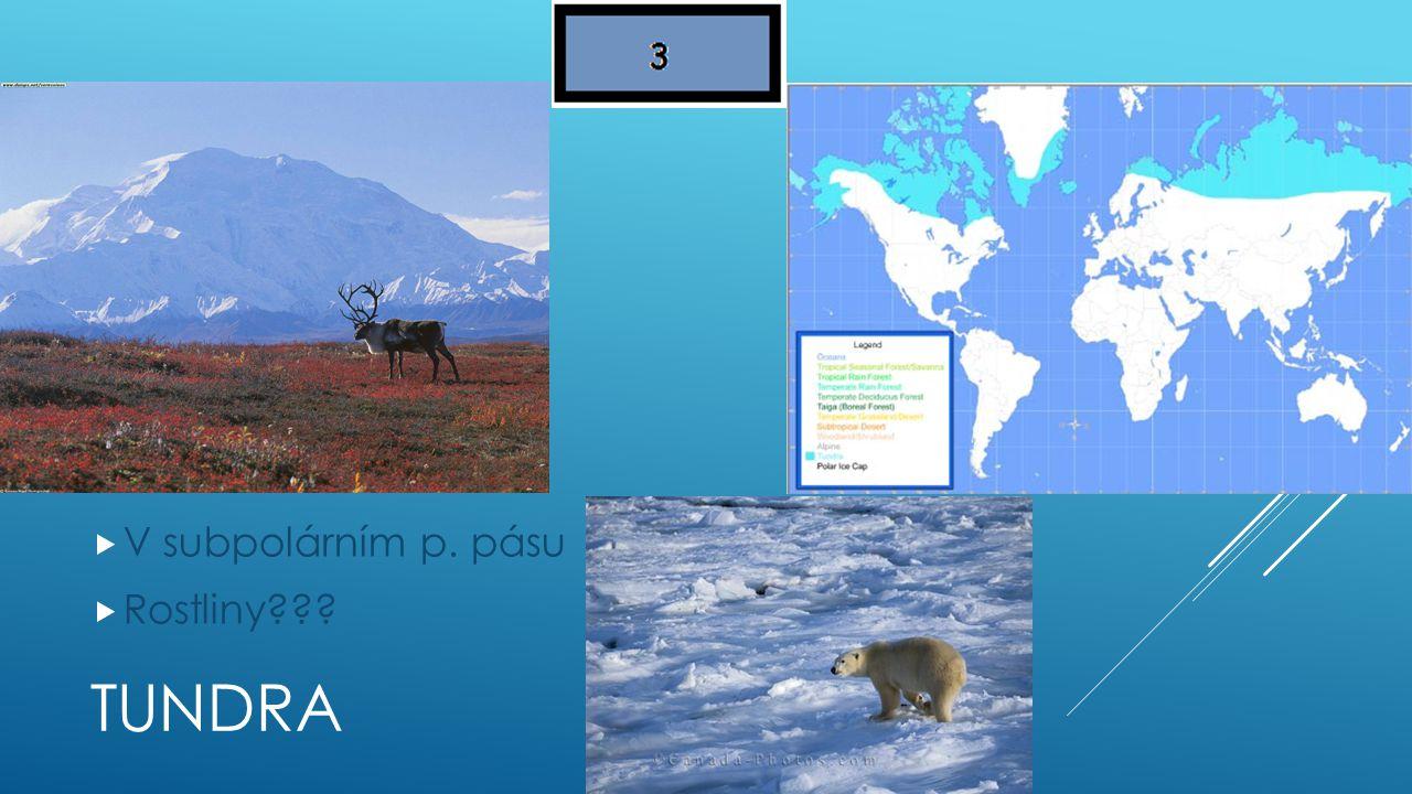 V subpolárním p. pásu Rostliny Tundra