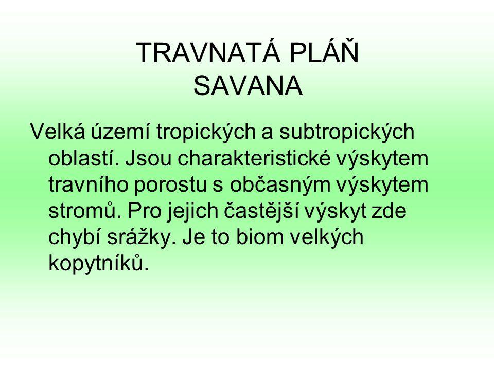 TRAVNATÁ PLÁŇ SAVANA