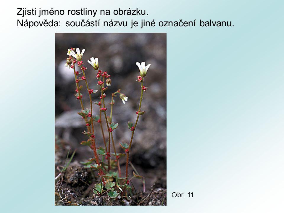 Zjisti jméno rostliny na obrázku.
