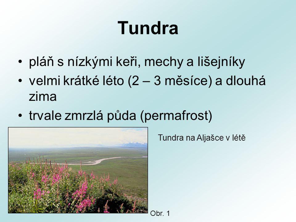 Tundra pláň s nízkými keři, mechy a lišejníky