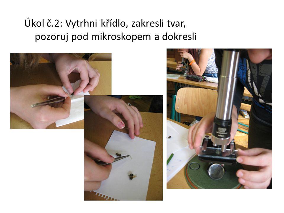 Úkol č.2: Vytrhni křídlo, zakresli tvar, pozoruj pod mikroskopem a dokresli