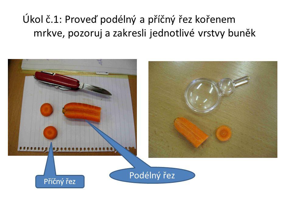 Úkol č.1: Proveď podélný a příčný řez kořenem mrkve, pozoruj a zakresli jednotlivé vrstvy buněk