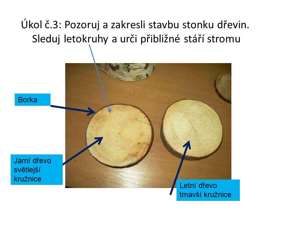 Úkol č. 3: Pozoruj a zakresli stavbu stonku dřevin