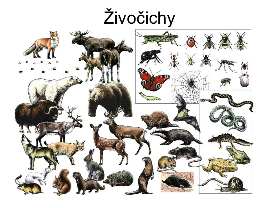 Živočichy