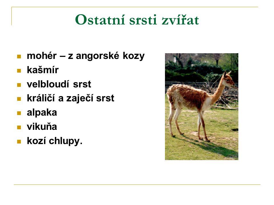Ostatní srsti zvířat mohér – z angorské kozy kašmír velbloudí srst