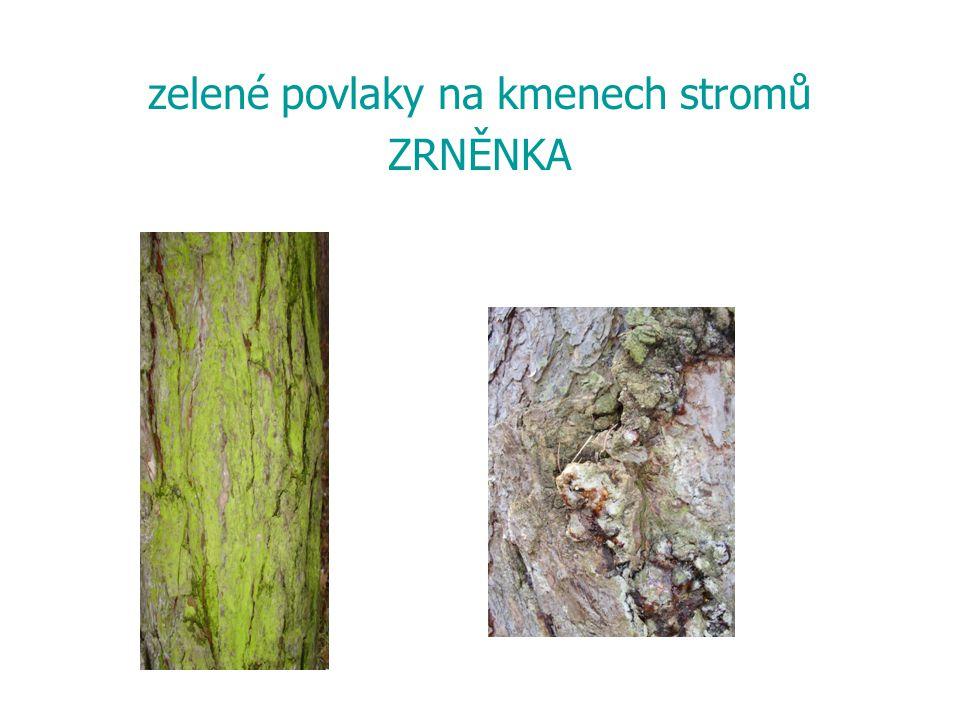 zelené povlaky na kmenech stromů