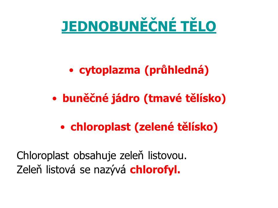 JEDNOBUNĚČNÉ TĚLO cytoplazma (průhledná) buněčné jádro (tmavé tělísko)