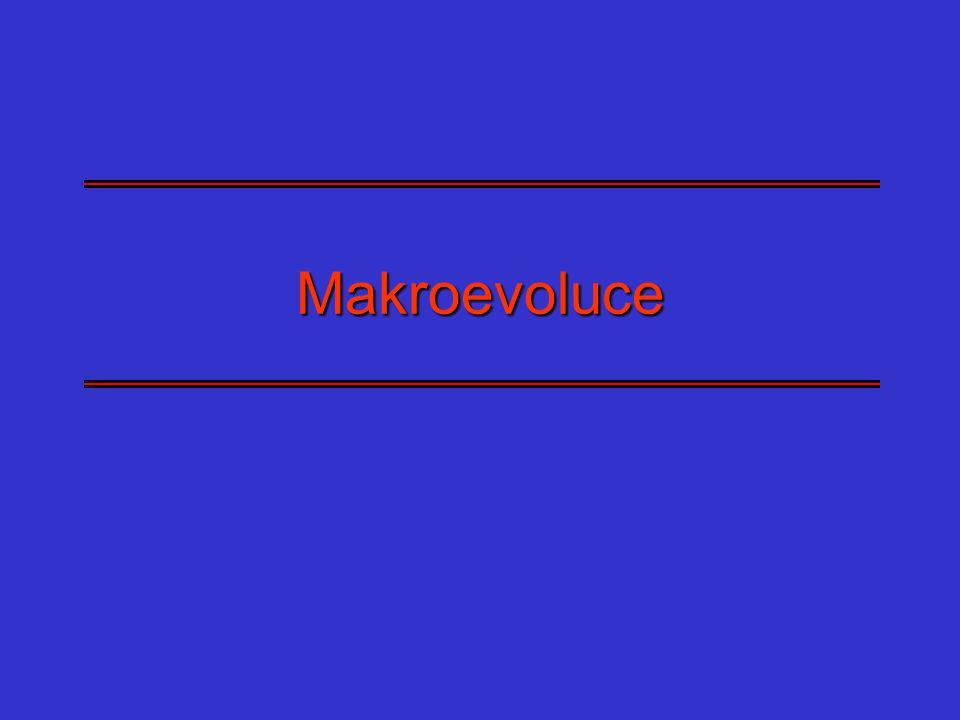 Makroevoluce