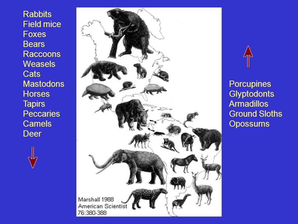 Rabbits Field mice Foxes Bears Raccoons Weasels Cats Mastodons Horses Tapirs Peccaries Camels Deer