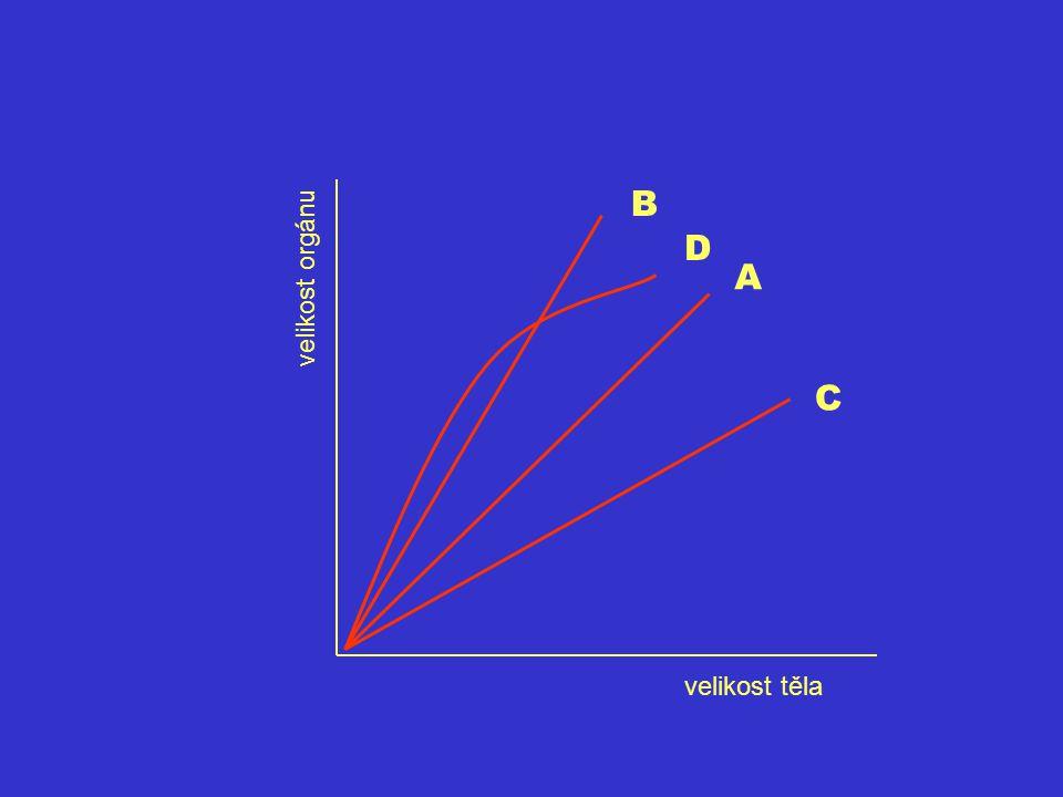 B D A C velikost orgánu velikost těla