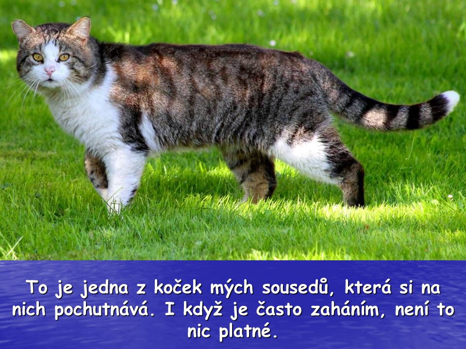 To je jedna z koček mých sousedů, která si na nich pochutnává