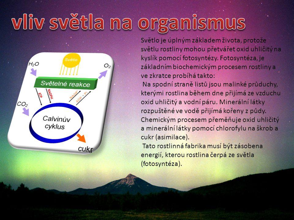 vliv světla na organismus