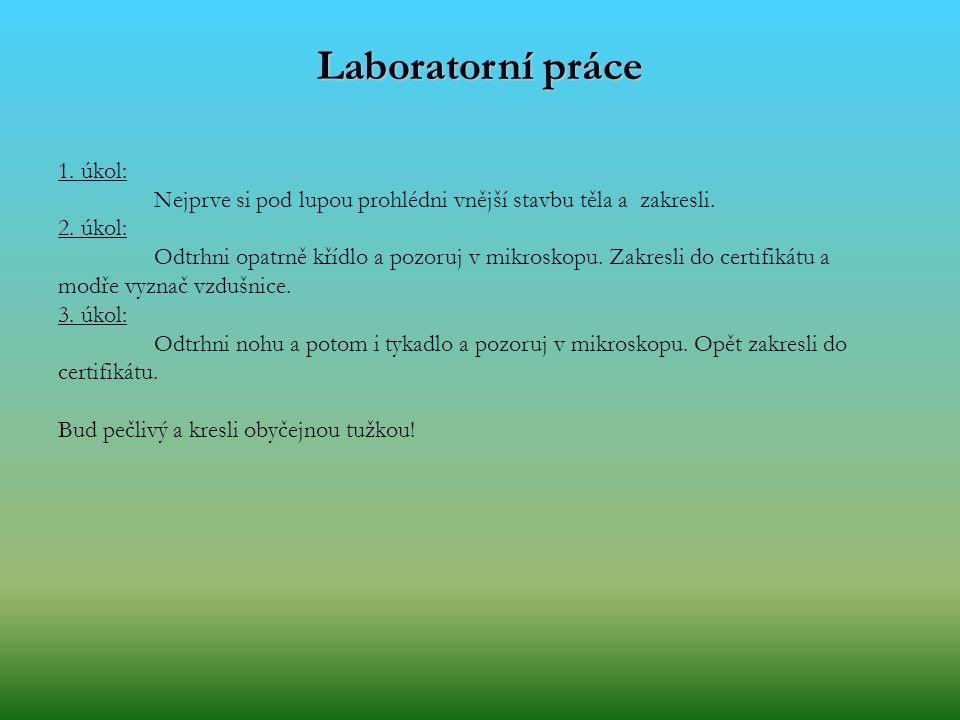 Laboratorní práce 1. úkol: