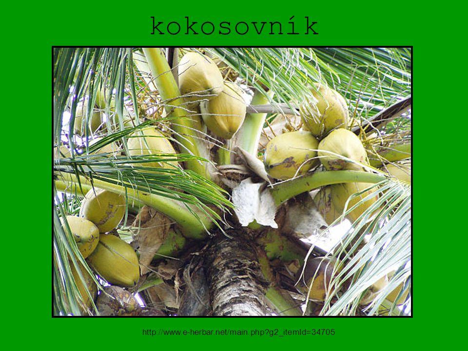 kokosovník http://www.e-herbar.net/main.php g2_itemId=34705