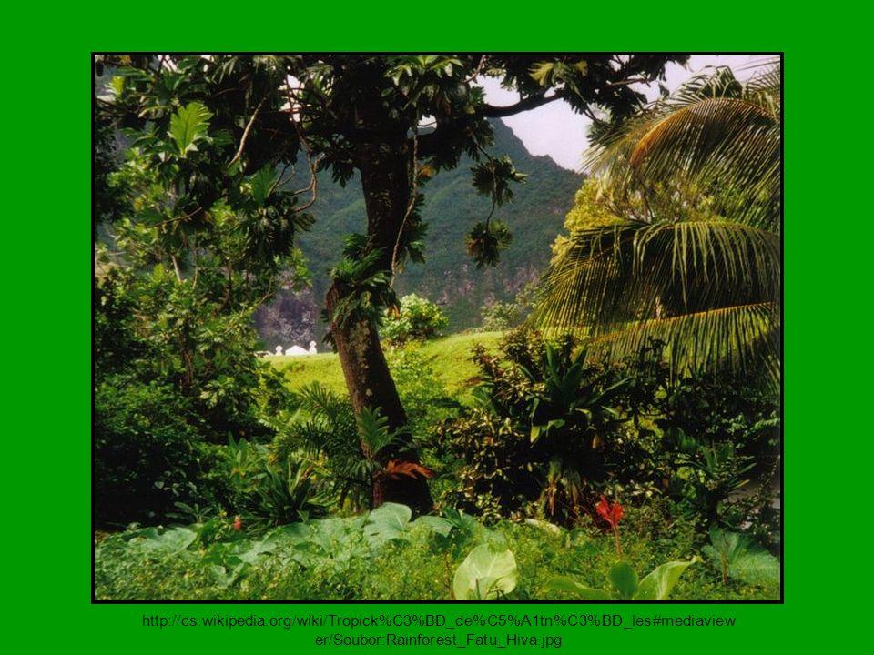 http://cs.wikipedia.org/wiki/Tropick%C3%BD_de%C5%A1tn%C3%BD_les#mediaviewer/Soubor:Rainforest_Fatu_Hiva.jpg