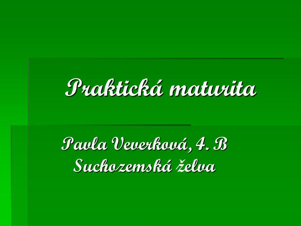 Pavla Veverková, 4. B Suchozemská želva