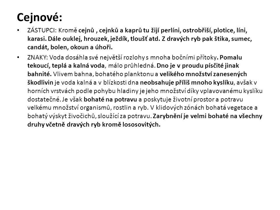Cejnové:
