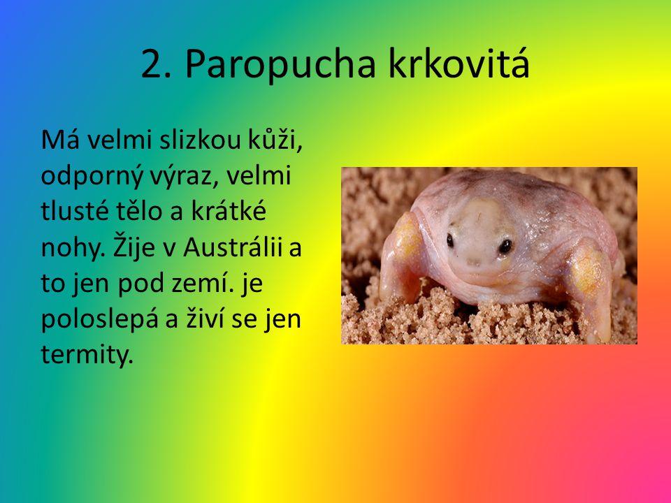 2. Paropucha krkovitá