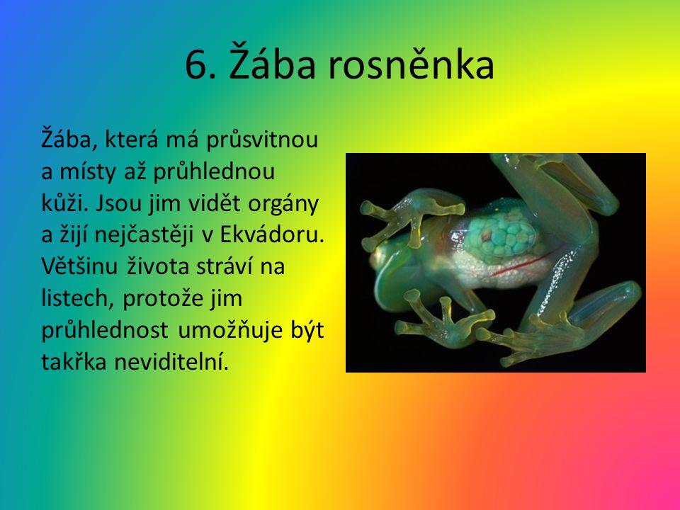 6. Žába rosněnka
