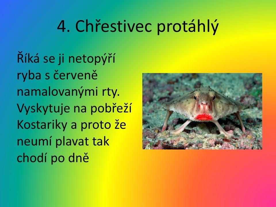 4. Chřestivec protáhlý Říká se ji netopýří ryba s červeně namalovanými rty.