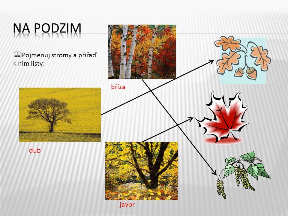 NA PODZIM Pojmenuj stromy a přiřaď k nim listy: bříza dub javor