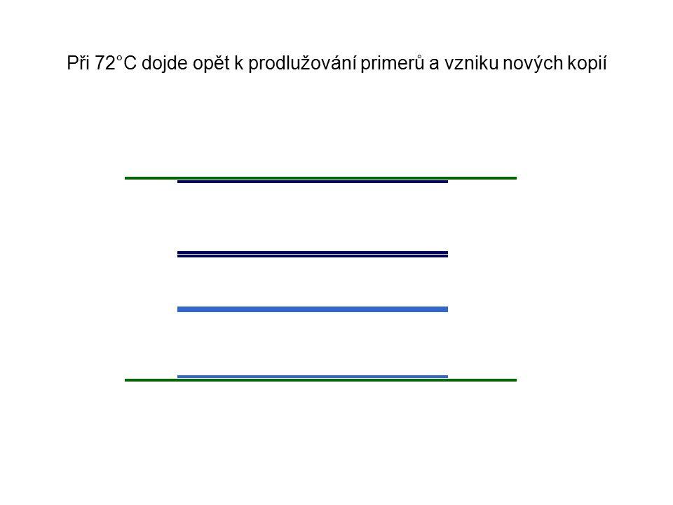 Při 72°C dojde opět k prodlužování primerů a vzniku nových kopií