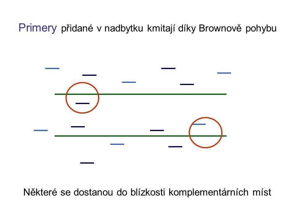 Primery přidané v nadbytku kmitají díky Brownově pohybu