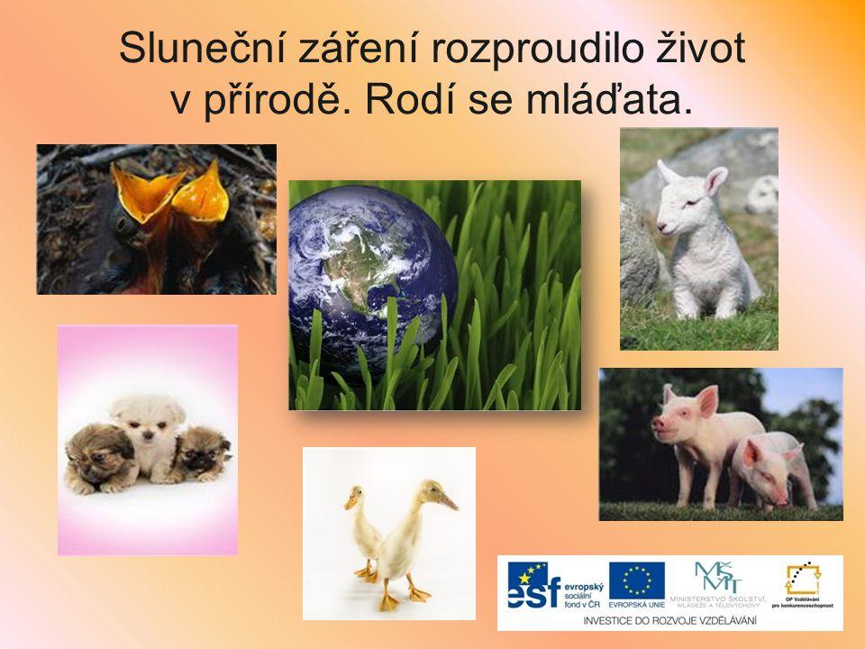 Sluneční záření rozproudilo život v přírodě. Rodí se mláďata.