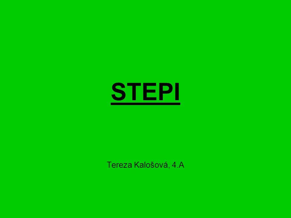 STEPI Tereza Kalošová, 4.A