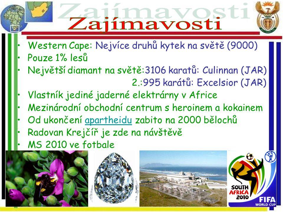 Zajímavosti Western Cape: Nejvíce druhů kytek na světě (9000)