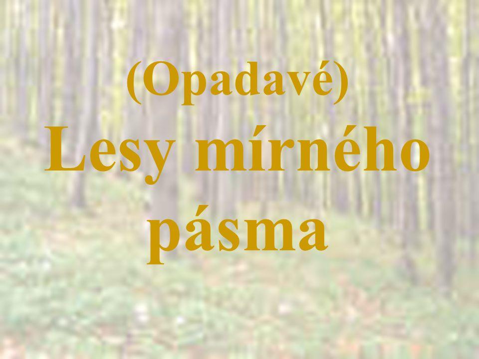 (Opadavé) Lesy mírného pásma