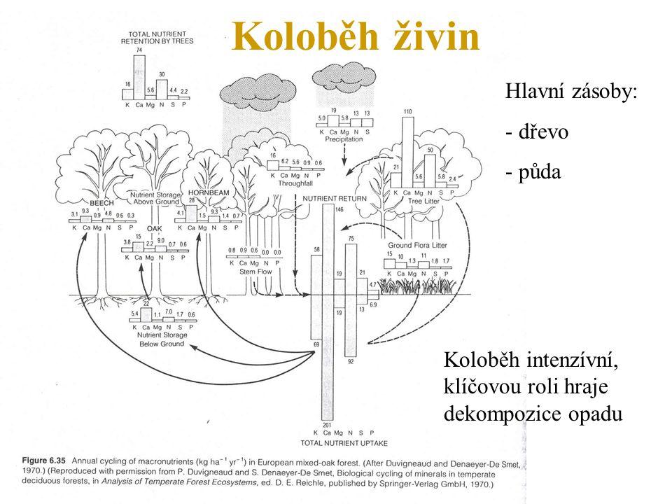 Koloběh živin Hlavní zásoby: - dřevo - půda