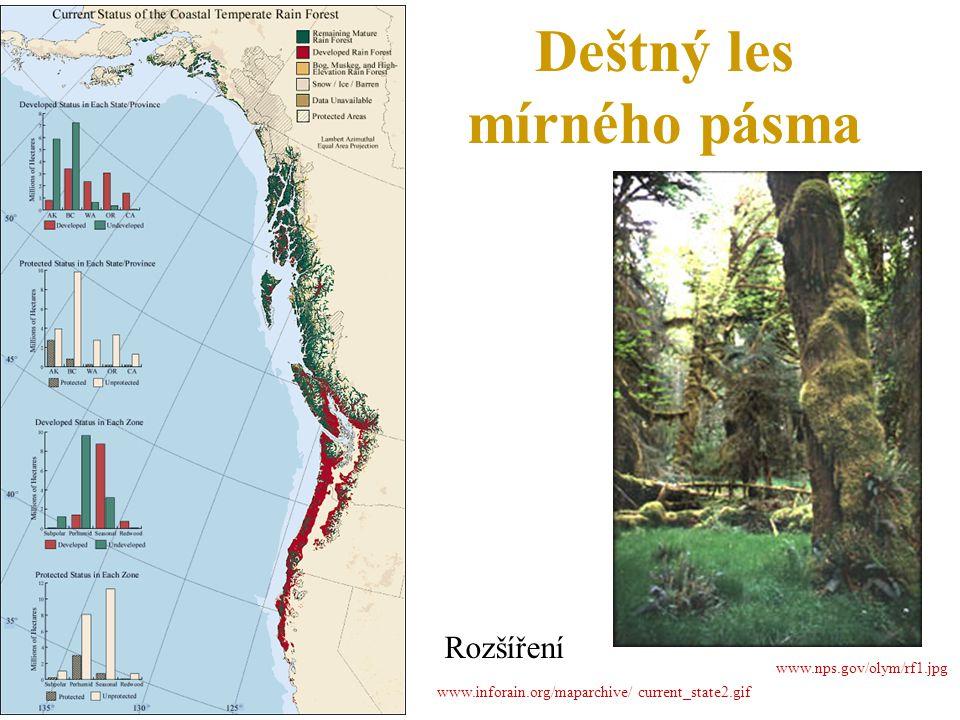 Deštný les mírného pásma