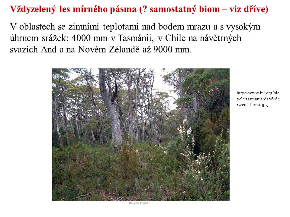 Vždyzelený les mírného pásma ( samostatný biom – viz dříve)