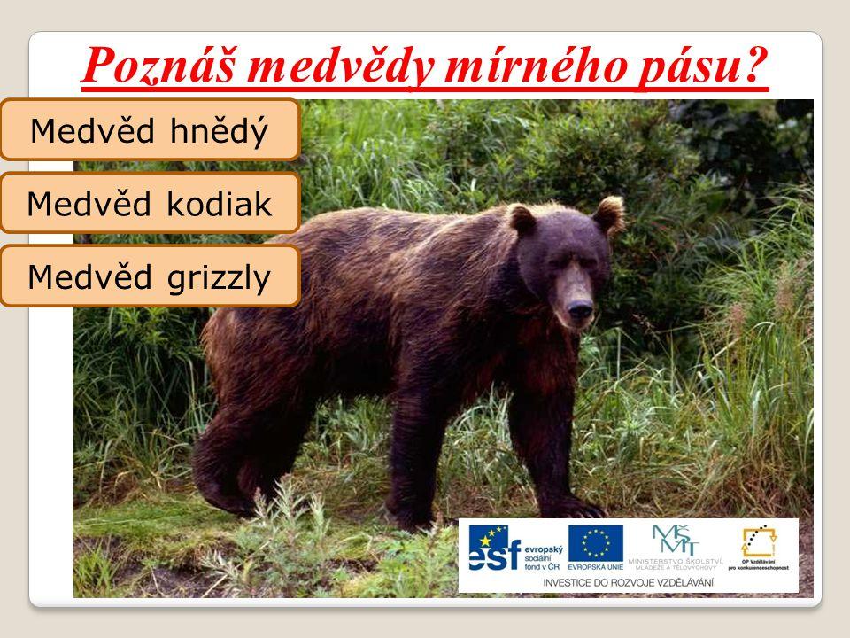 Poznáš medvědy mírného pásu