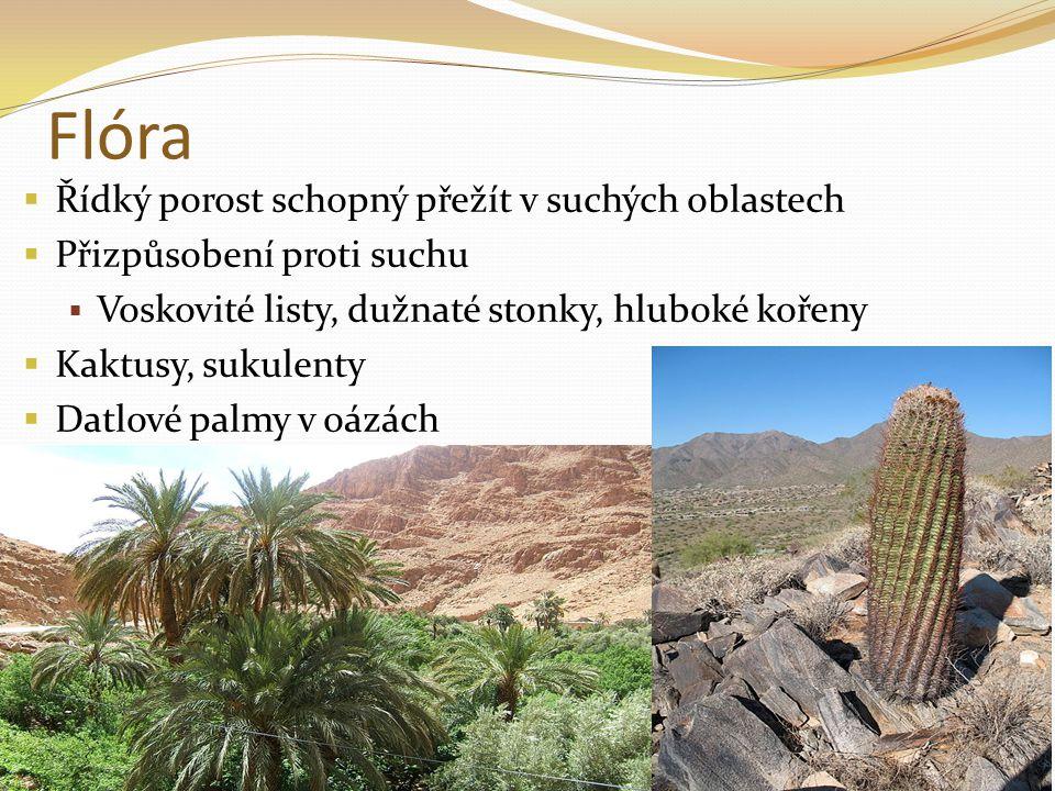 Flóra Řídký porost schopný přežít v suchých oblastech