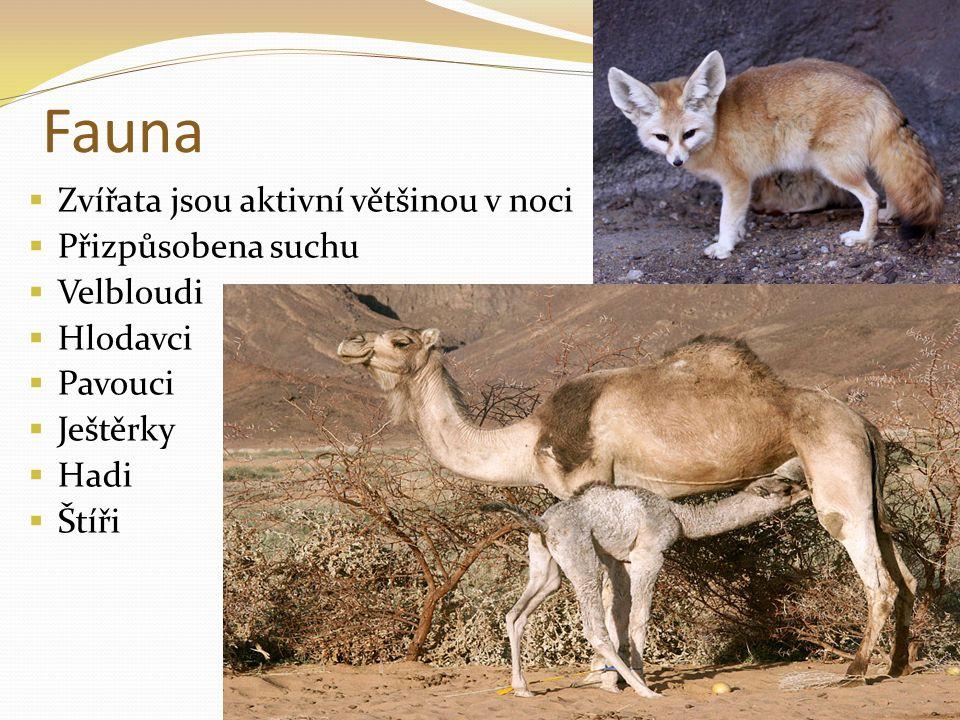 Fauna Zvířata jsou aktivní většinou v noci Přizpůsobena suchu