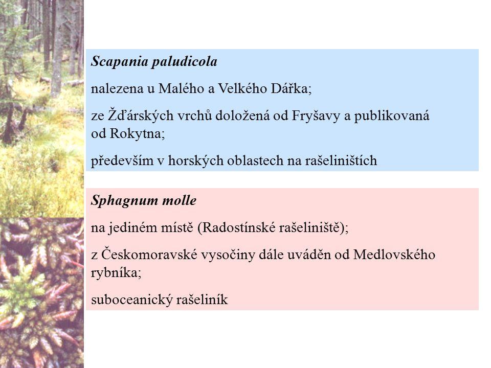 Scapania paludicola nalezena u Malého a Velkého Dářka; ze Žďárských vrchů doložená od Fryšavy a publikovaná od Rokytna;
