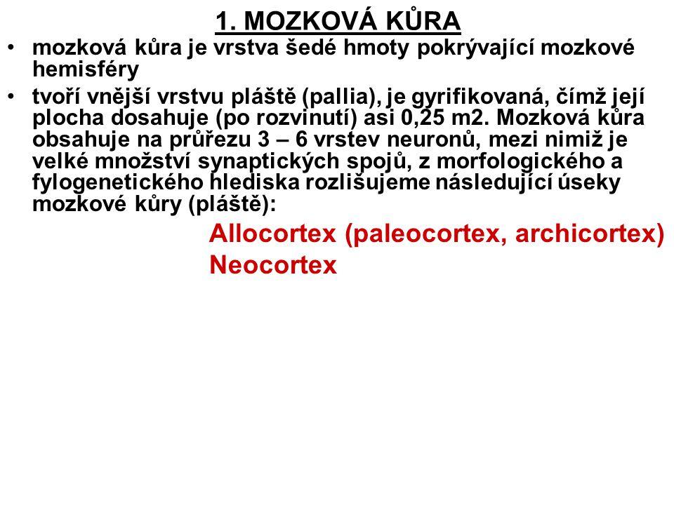 1. MOZKOVÁ KŮRA Neocortex