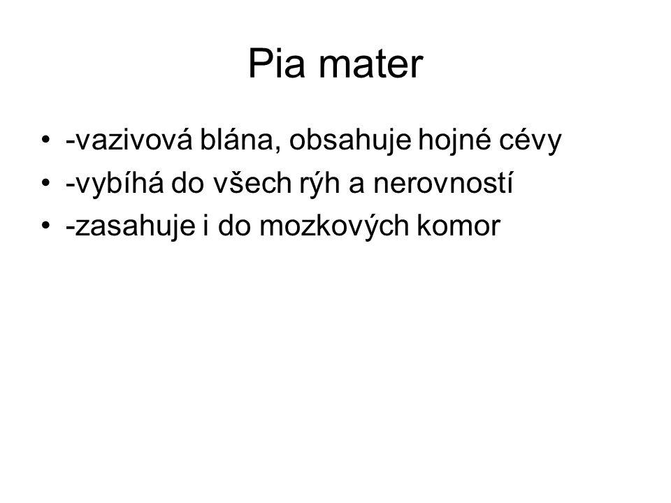 Pia mater -vazivová blána, obsahuje hojné cévy