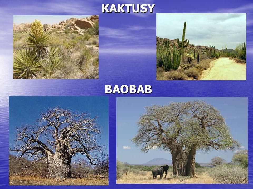 KAKTUSY BAOBAB