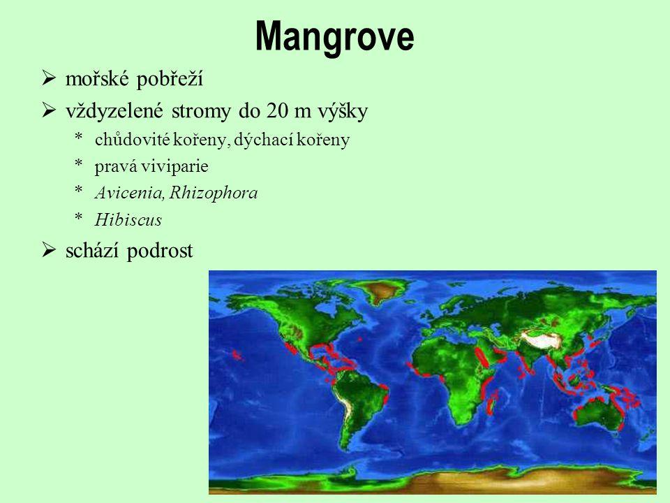 Mangrove mořské pobřeží vždyzelené stromy do 20 m výšky schází podrost